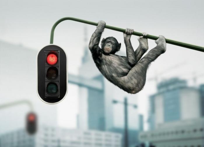 Креативные работы Koen Demuynck (47 фото)