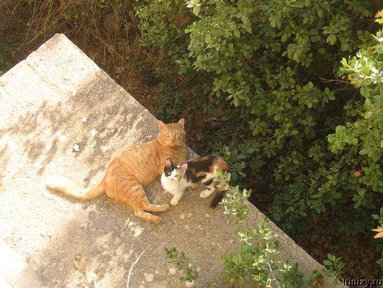 Роман-комикс про котов (20 фото)