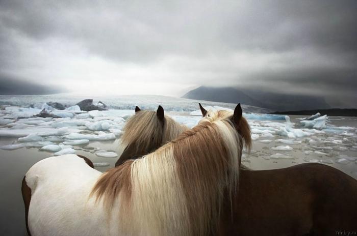 Красивые фотографии животных (47 фото)