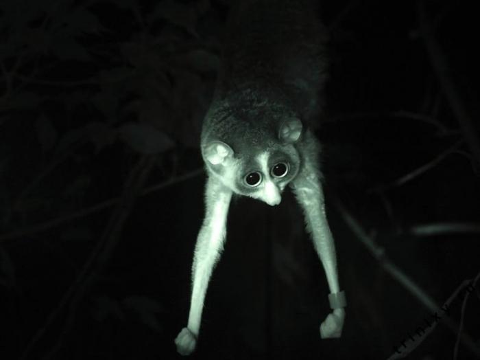 Классные зверьки (31 фото)
