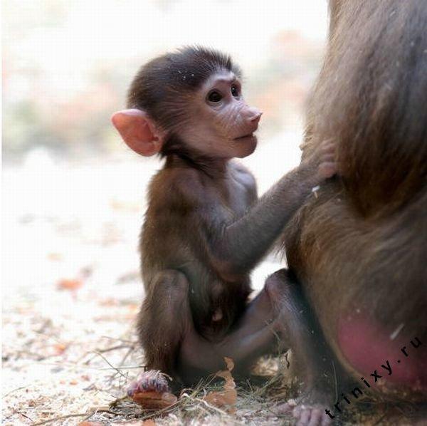 Мегапозитив. Маленькие обезьянки (35 фото)