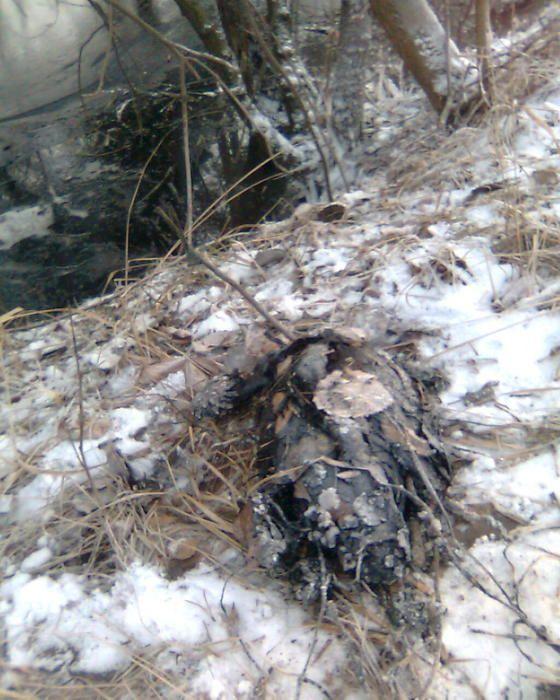 Экологическая катастрофа недалеко от Москвы (11 фото)