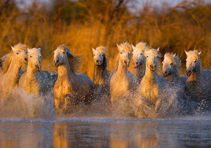 Лошади (5 Фото)