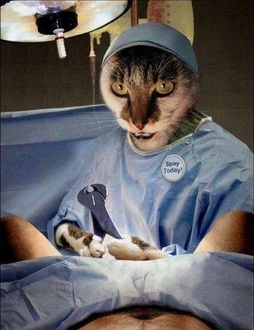 Фотки коты и люди