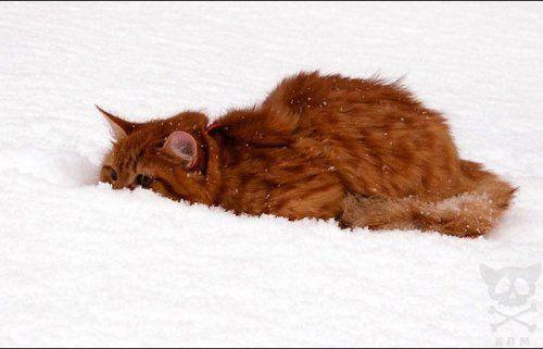 А за окном зима... Zimnie_koshaki_04
