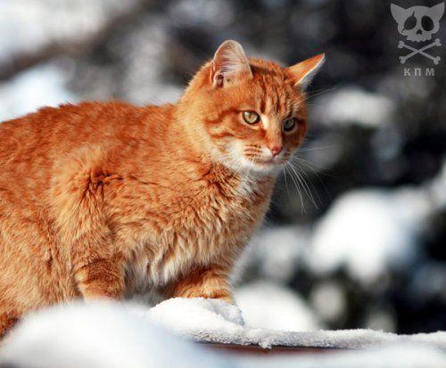 А за окном зима... Zimnie_koshaki_22