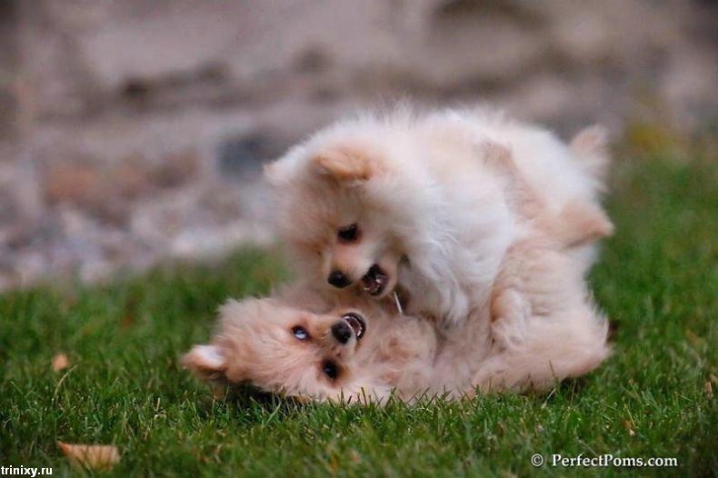 Жесть дня. Собачьи бои (21 фото)