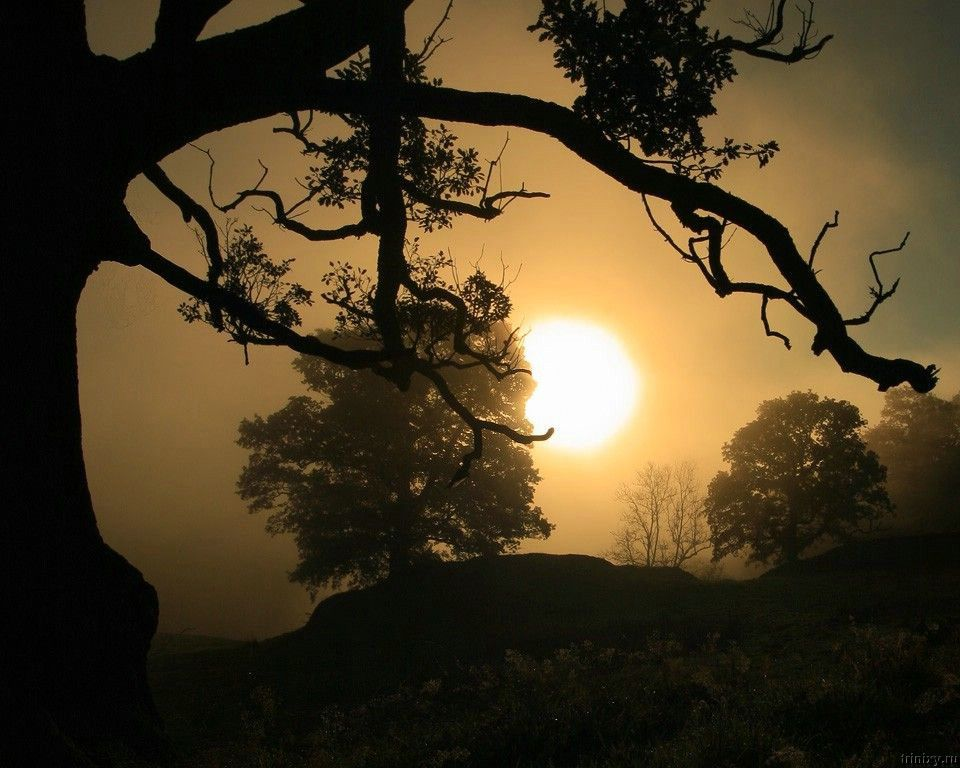 Природа от Стива Хайфилда (Steve Highfield) - 58 фото
