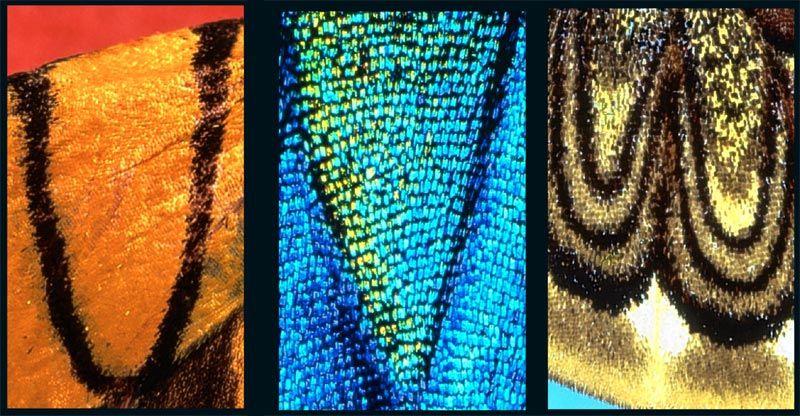 Алфавит невиданной красы (9 фото)