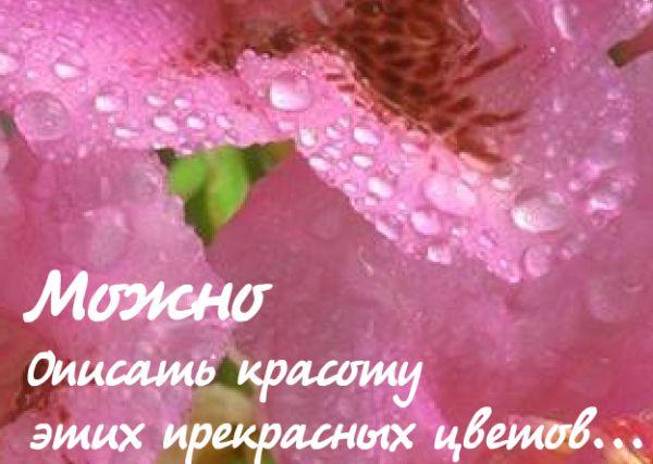 Еще одна флэшка про любовь )