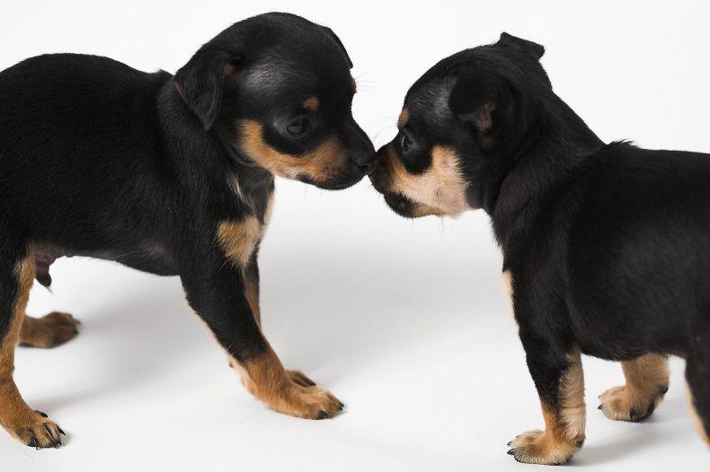 Классные щенки. Позитивно ) (28 фото)