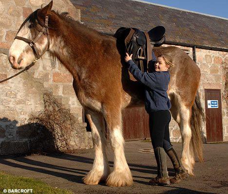 Лошадки бывают разные (3 фото)