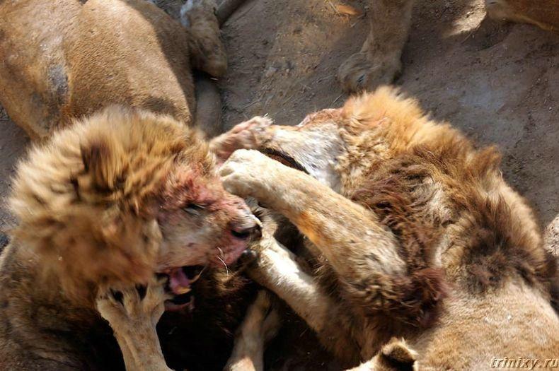 Жесть в китайском зоопарке (5 фото)