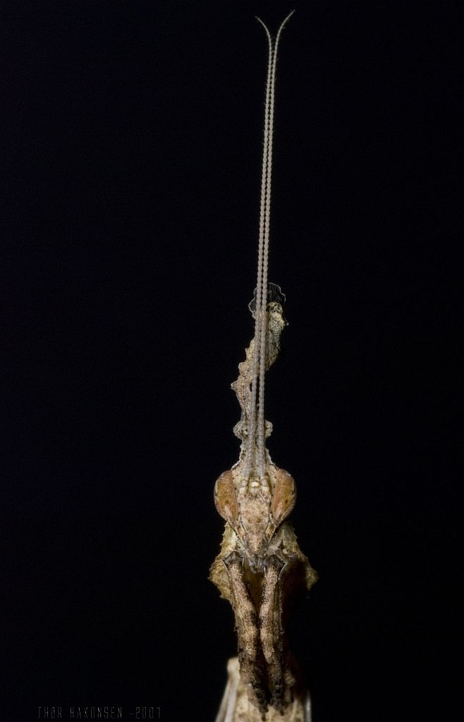 Богомолы (47 фото)
