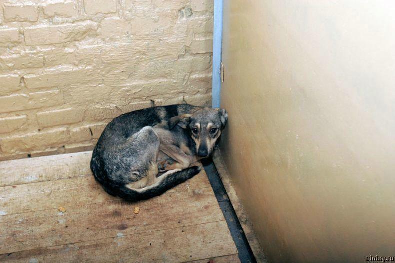 Приют для собак в селе Бородянка (26 фото)