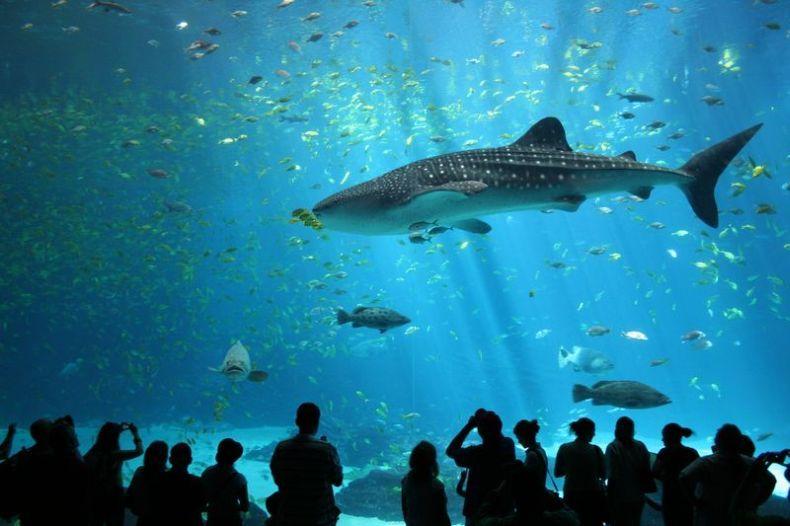 Лучшие фотографии 2007 года по версии Wikimedia.