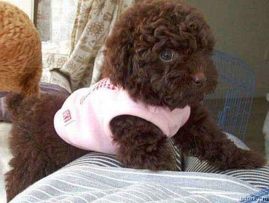 Самый классный пес (15 фото)