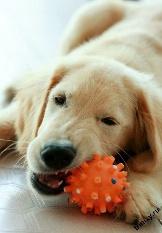 Пост про собак (30 фото)