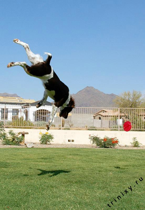 Летающая собака (35 фото)