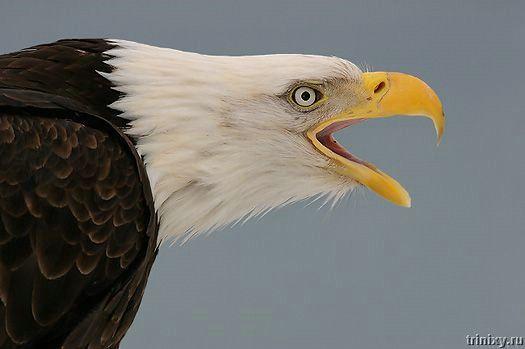 Изумительные фотографии птиц (54 фото)