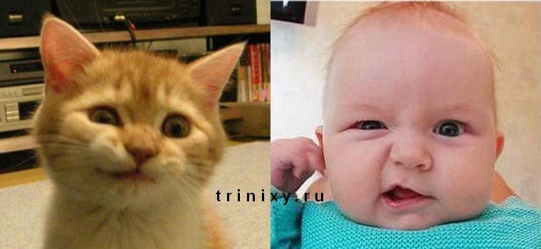 Коты, как дети (17 фото)