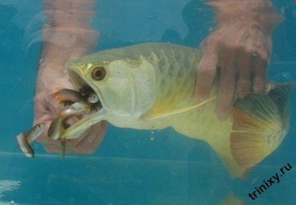Очень необычная рыбка (5 фото)