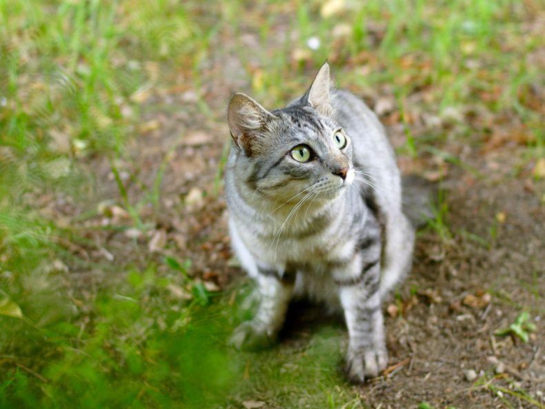 Очень преочень классные фотографии котов (56 фото)