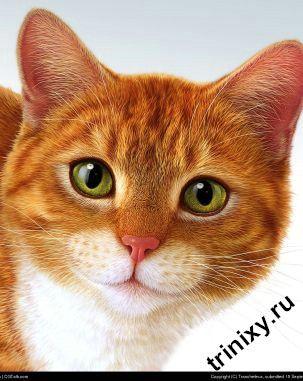 Котокролик (3 фото)