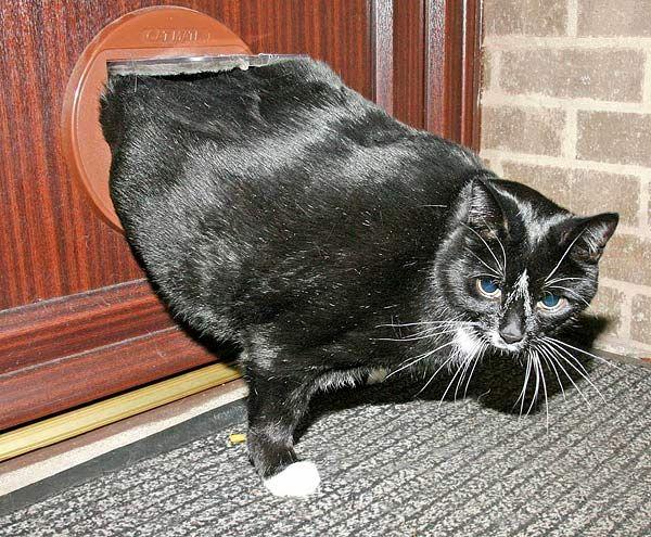 Толстый котик на диете (3 фото)