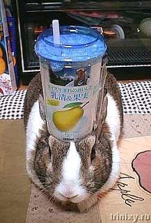 Подопытный кролик (56 фото)