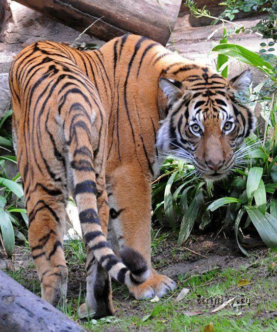 Прогулка по зоопарку Сан-Диего (24 фото)