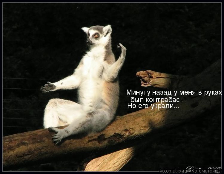 http://cdn.trinixy.ru/pics3/20080221/kotomatrix_77.jpg