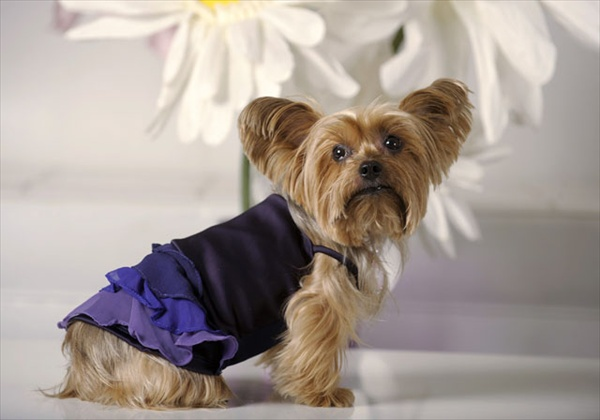 Показ собачьей моды Little Lily (14 фото)