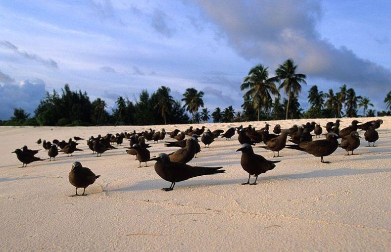 Какая красота! Сейшельские острова (16 фото)