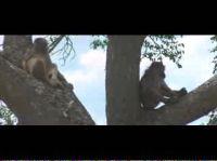 Пьяные животные (7 видео)