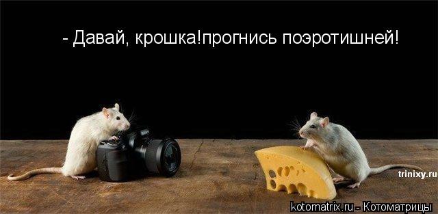 Котоматрицы (30 картинок)