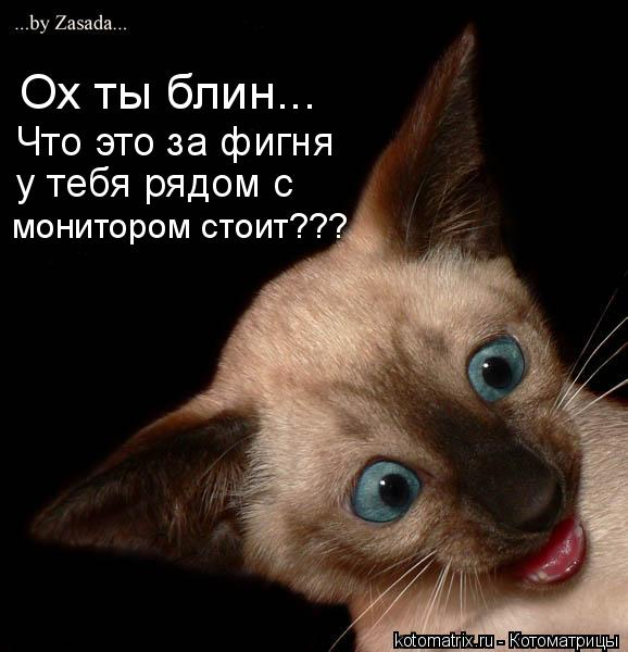Новые котоматрицы (35 фото)