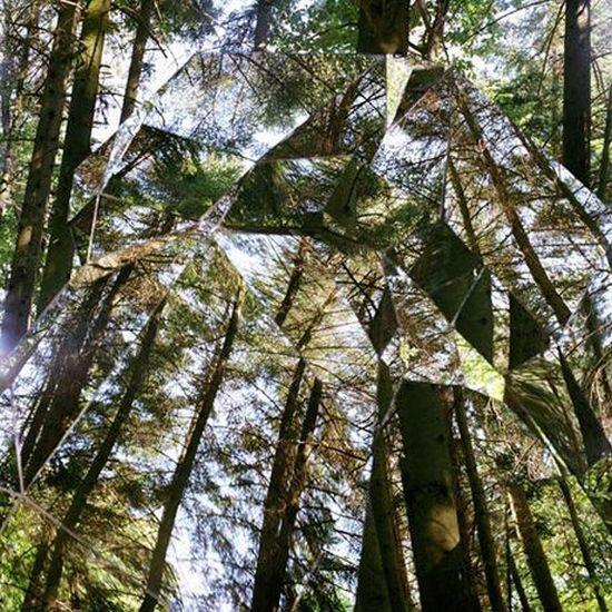 Зеркальная дыра в лесу (4 фото)