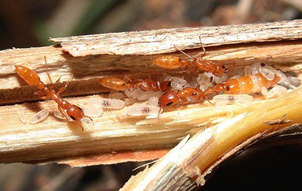 Из жизни муравьев. Очень интересно (35 фото + текст)