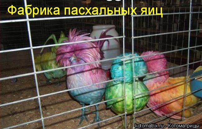 Котоматриця!)))) - Страница 2 Kotomatrix_15