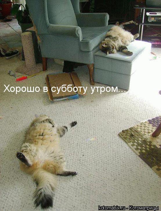 Котоматрица (60 картинок)