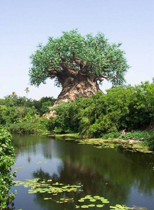Удивительное дерево (10 Фото)