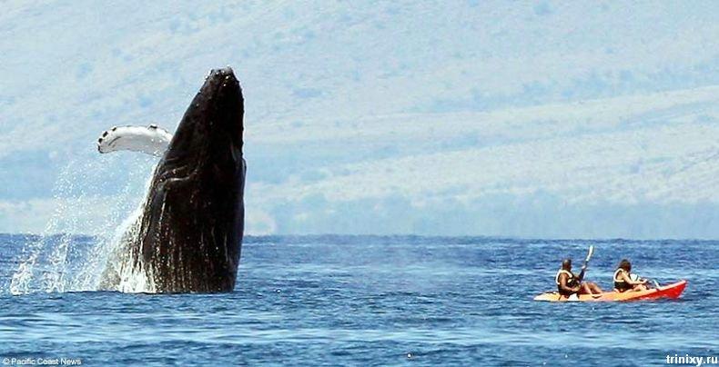 Встреча с китом во время отдыха на Гаваях (4 фото)