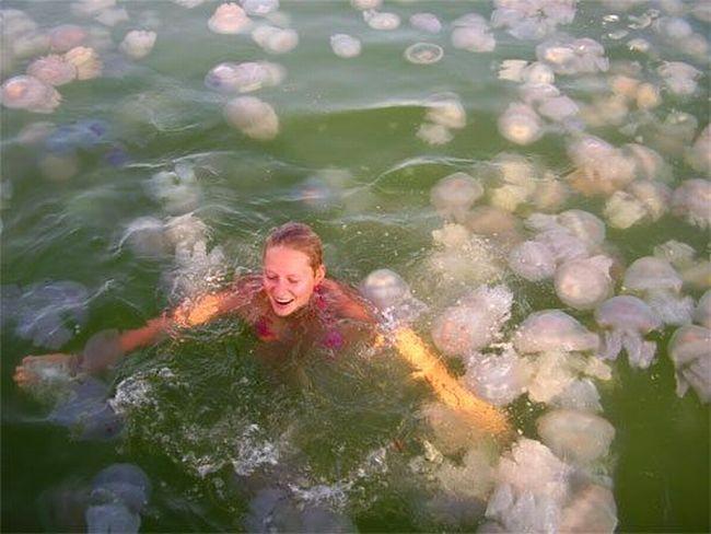 Девушка среди медуз (4 фото)