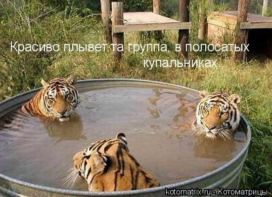 http://de.trinixy.ru/pics3/20080318/kotomatrix_67.jpg