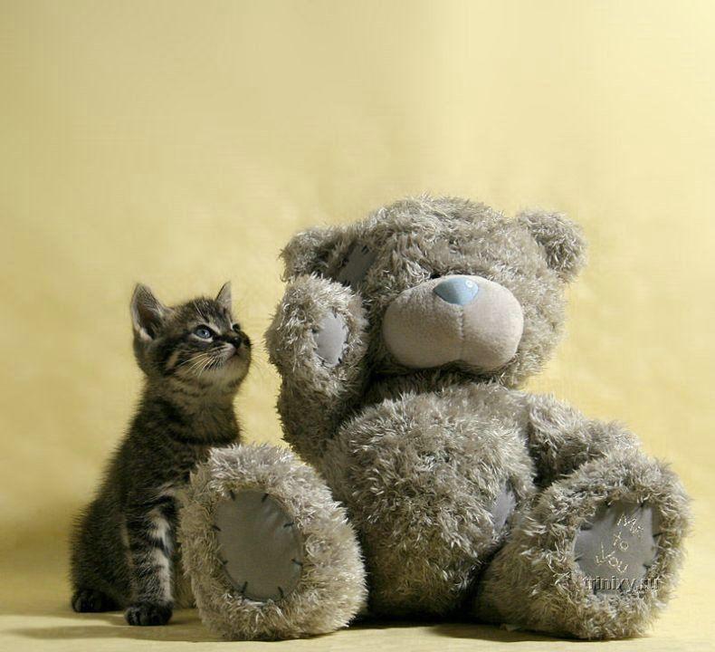 свободное время картинки медведь и кошка высокого качества