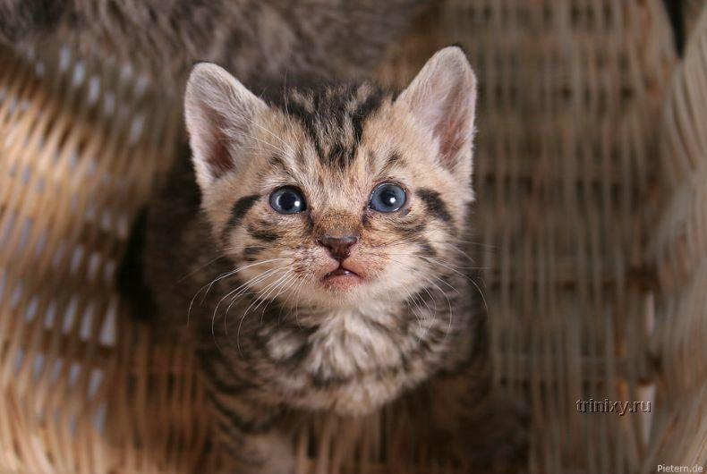 Позитивчик дня. Отличные фотографии котят и котов (63 фото)