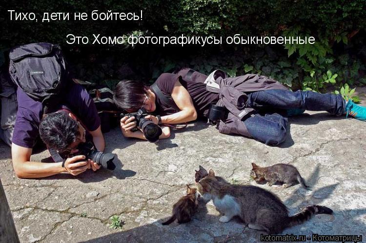 Котоматрицы (57 картинок)