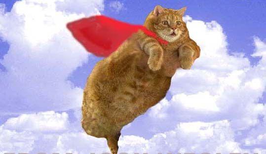 Московские коты взлетели в воздух (3 фото)