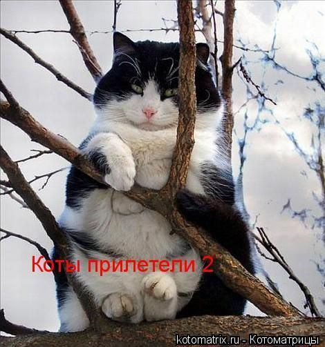 Лучшие котоматрицы (23 штуки)